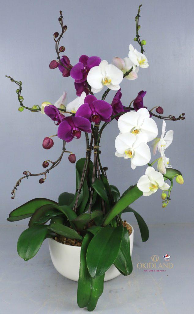 Composition pour les abonnements orchidées